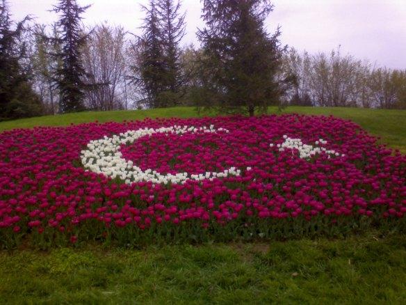 Ay_Yildiz_Moon_Star_made_of_flowers